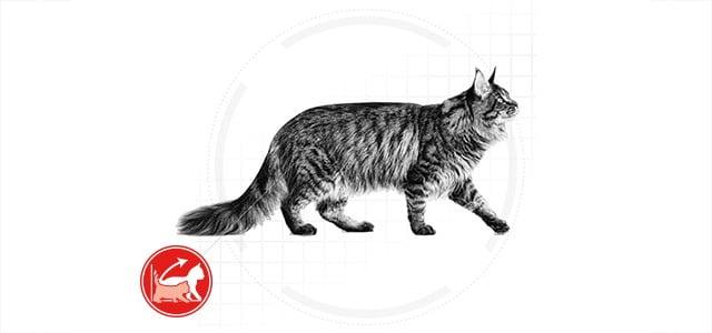 قبل از گرفتن یک بچه گربه چه چیزهایی را باید بدانم؟