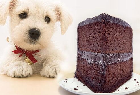 سگ شکلات