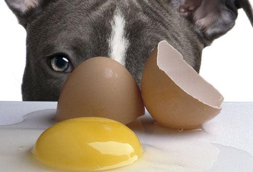سگ تخم مرغ