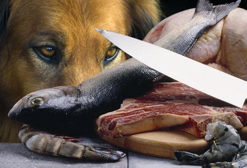 سگ گوشت خام و ماهی