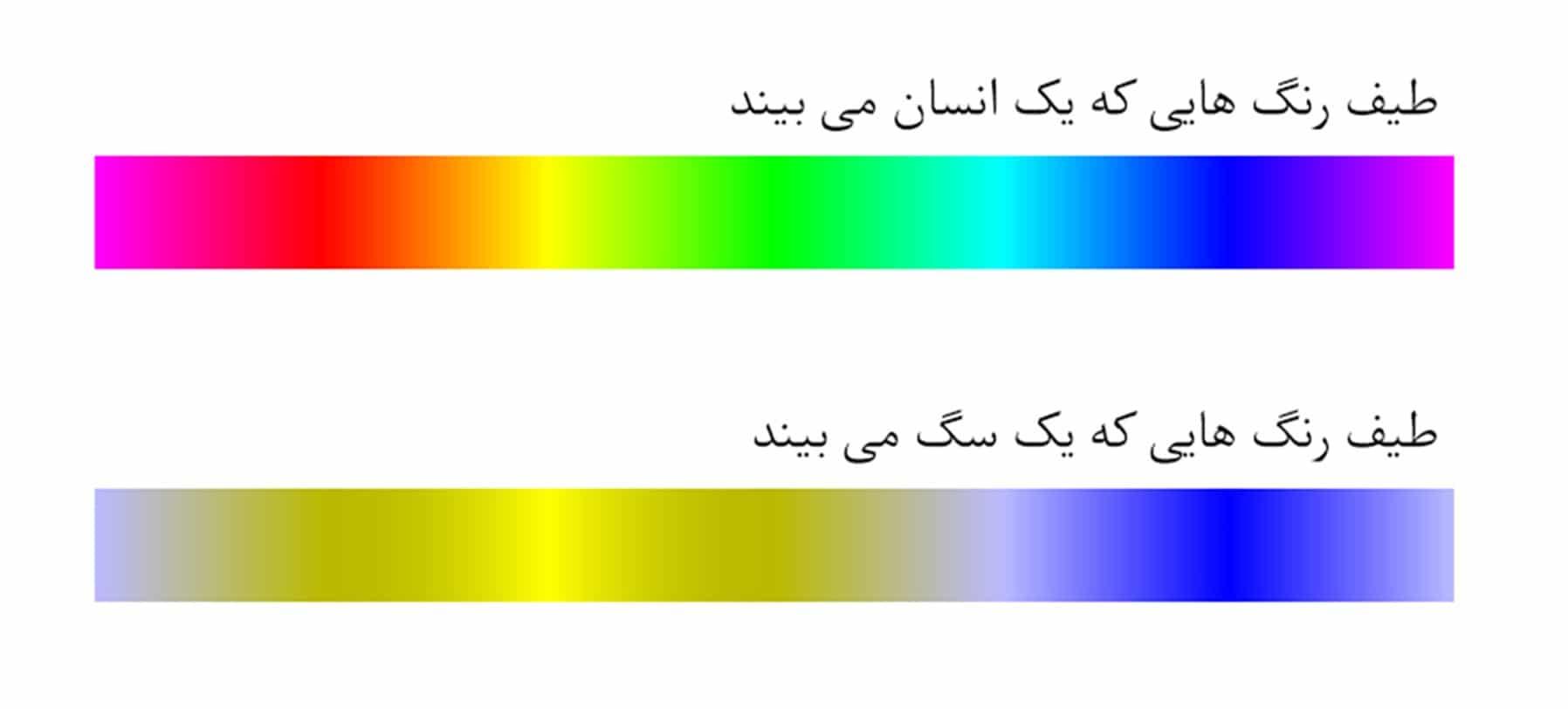 Dog human sight spectrum