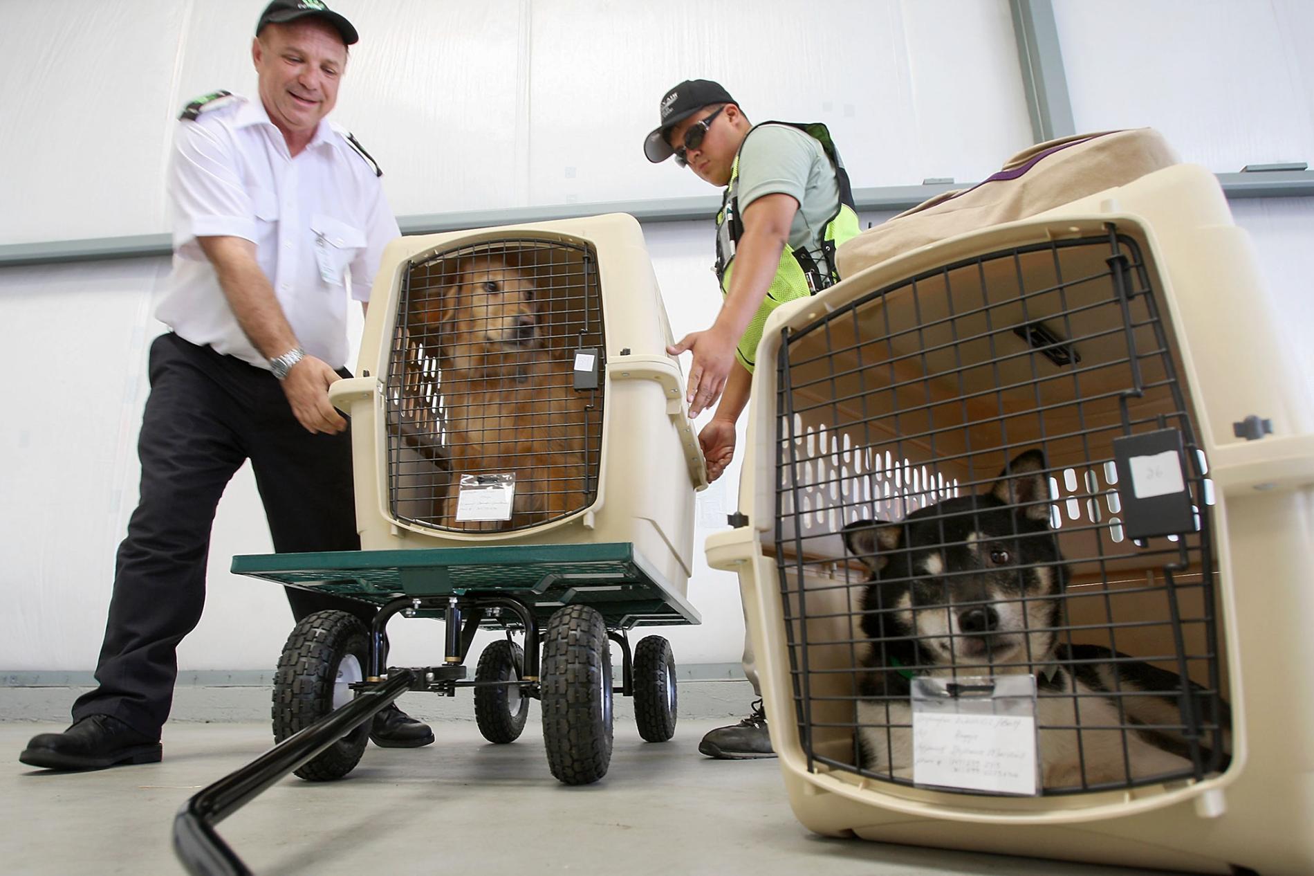 حمل و نقل هوایی حیوانات