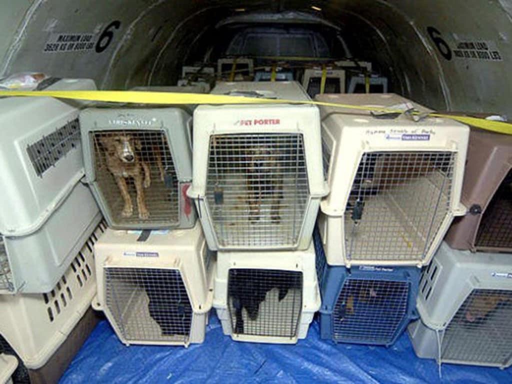 یاتا حمل و نقل هوایی حیوانات