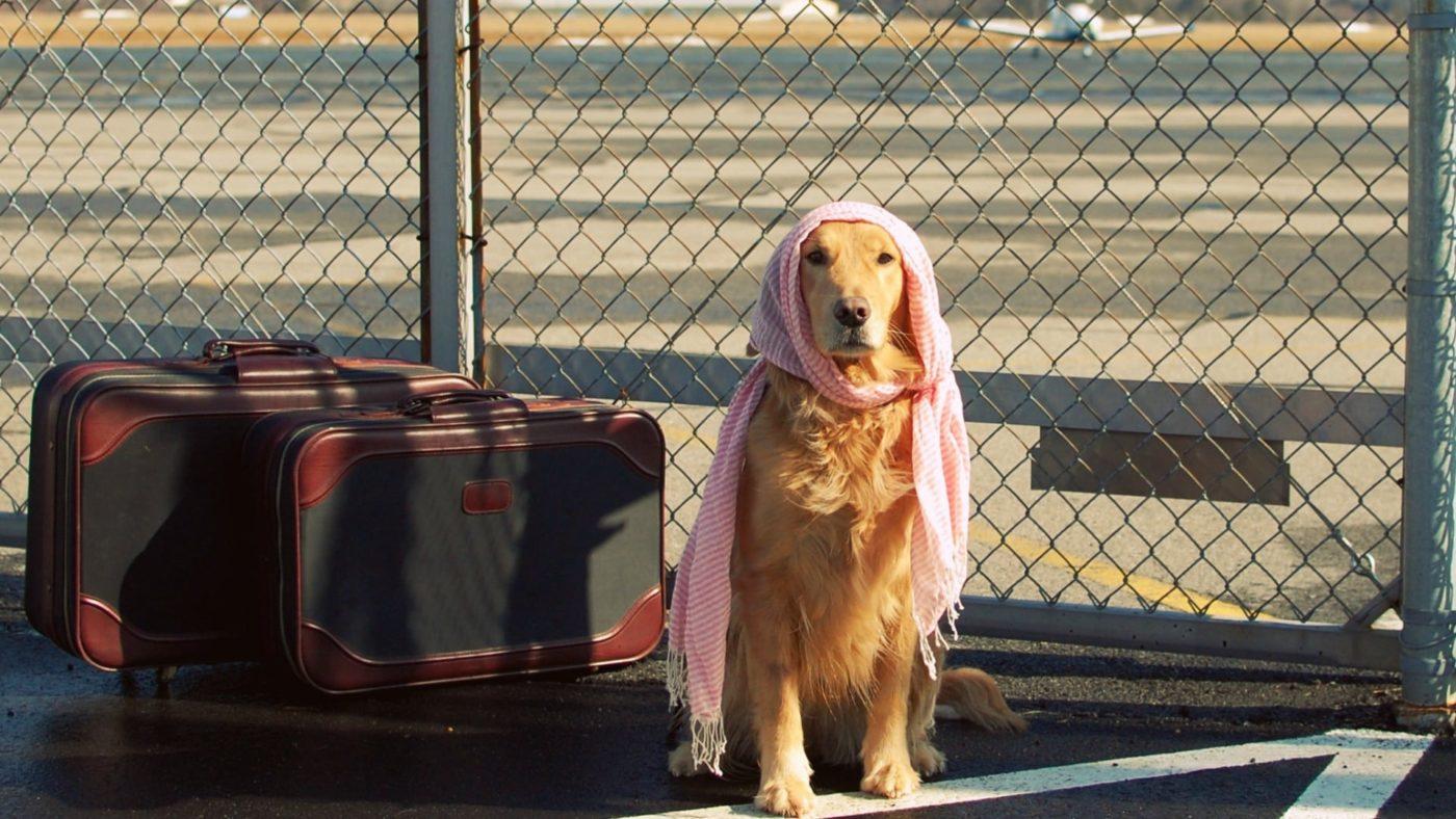 مسافرت های هوایی با حیوانات