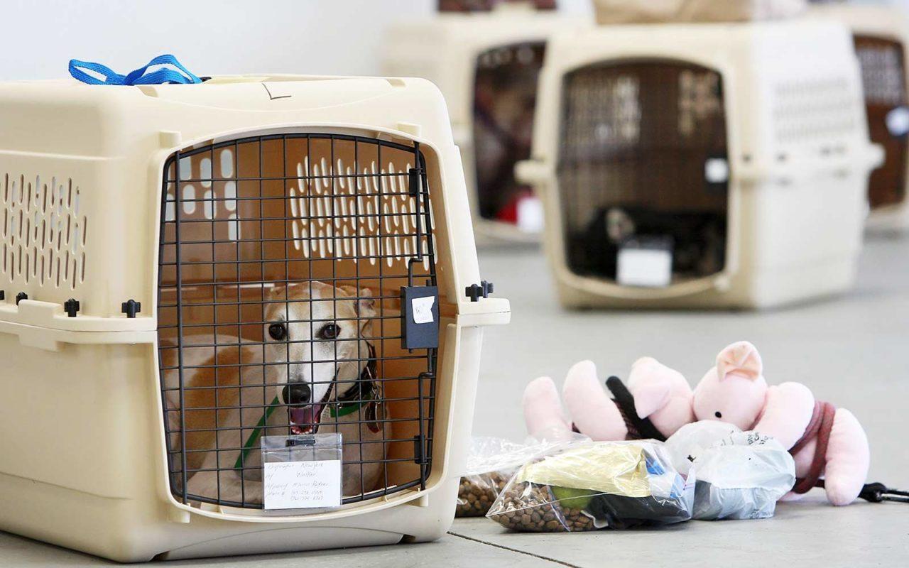 باکس حمل سگ یاتا