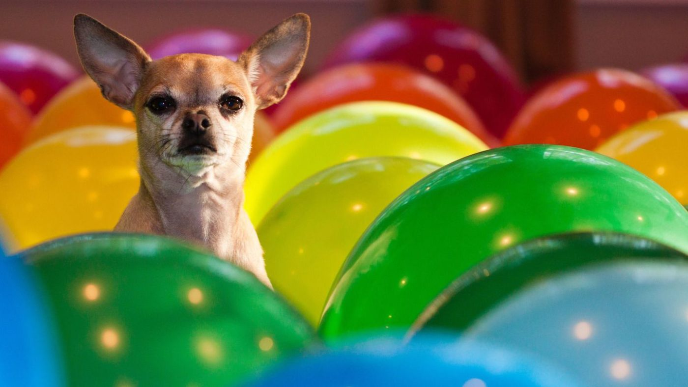سگ ها چه رنگ هایی را می بینند
