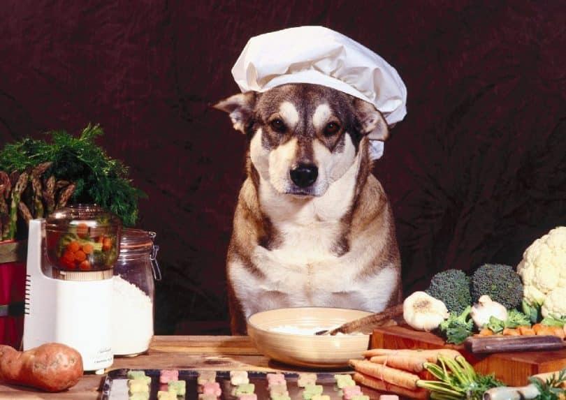 سگ در آشپزخانه