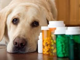 سگ و دارو