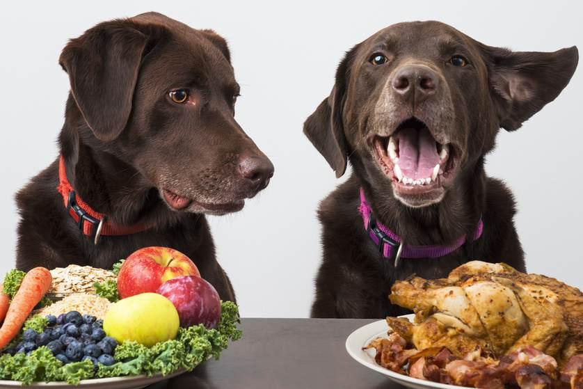خطرات غذاهای با پروتئین بالا در سگ
