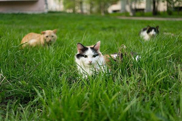 گربه ها در علفزار