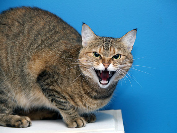 حمله گربه به افراد
