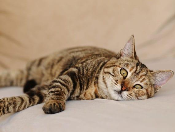 اسهال، یبوست در گربه