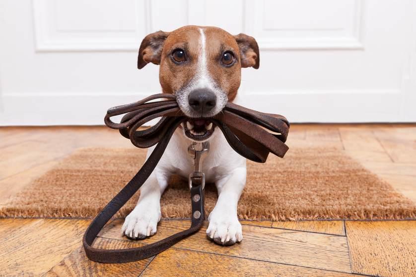 چه میزان سگتان را باید به پیاده روی ببرید؟