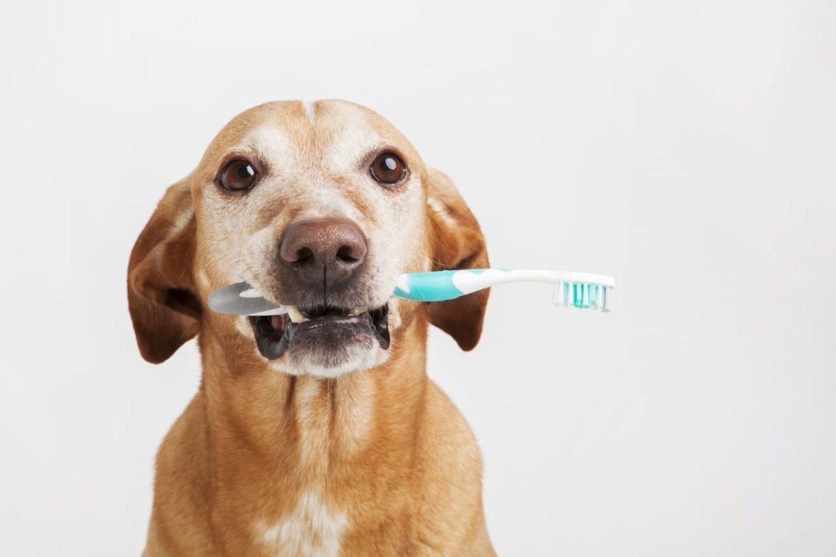 5 حقیقت جالب در مورد دندان سگ ها