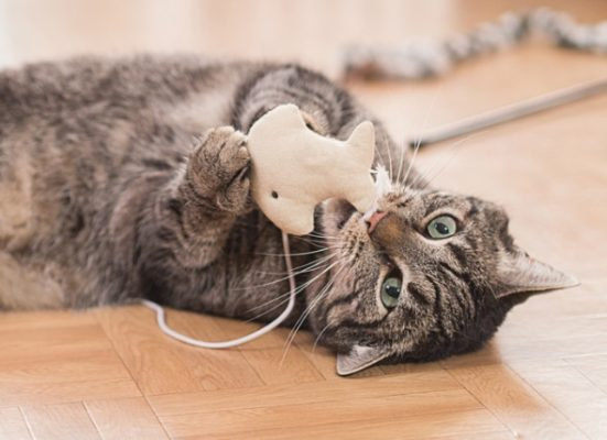چرا گربه ها برای صاحبان خویش هدیه می آورند