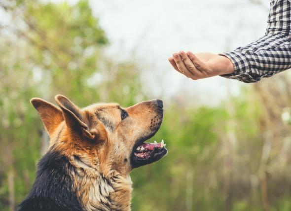 روش های آموزش سگ ها