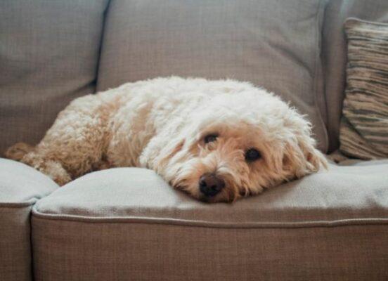 6 موردی که باعث آلرژی در حیوانات خانگی شما می شود