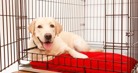 جعبه تختخواب محافظ دار توله سگ