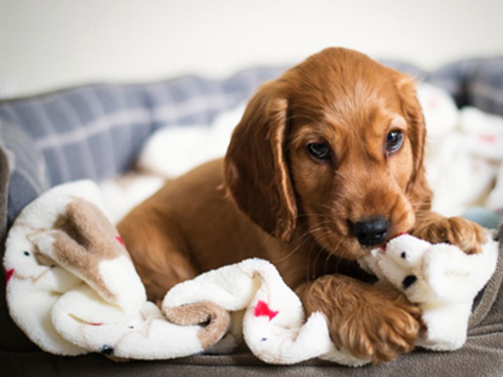 تجهیزات مورد نیاز توله سگ ها و سگ های بالغ خانگی