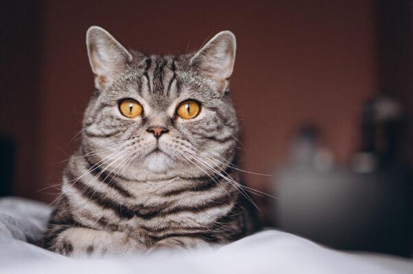 بچه گربه ملوس روی تخت